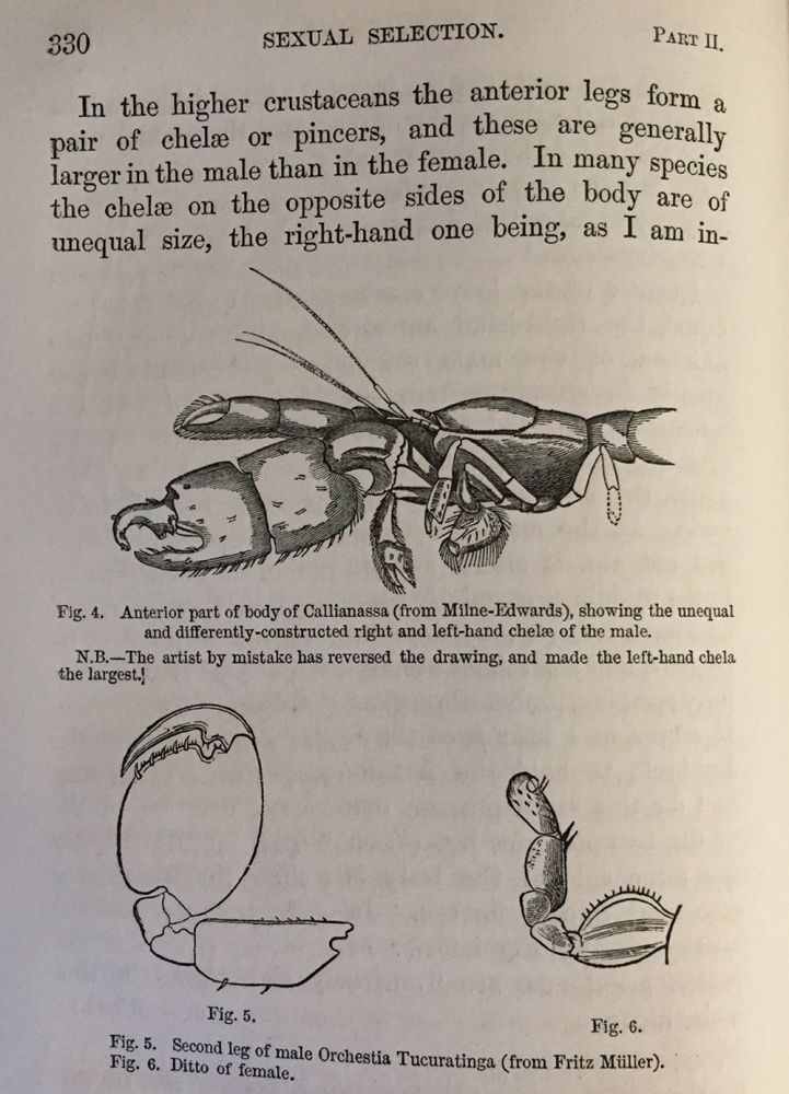 """""""Sexual selection in relation to monkeys."""" In Nature, Volume VX, November 1876 to April 1877, pp. 18-19. Charles DARWIN."""
