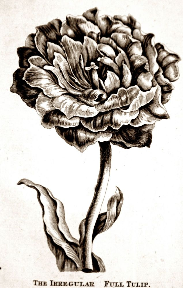 A method of producing double flowers from single, by a regular course of culture. JOHN HILL.