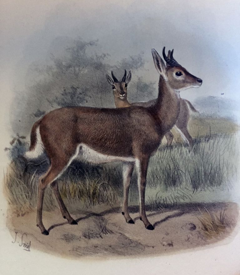 The book of antelopes. Philip Lutley SCLATER, Oldfield THOMAS.