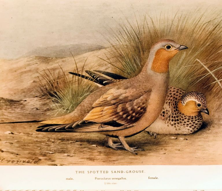 The game-birds of India, Burma and Ceylon. Ducks and their allies (swans, geese and ducks). Stuart BAKER.