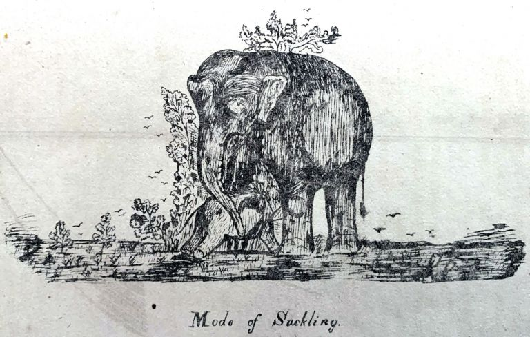 Elephants and their treatment in health and disease. Martinus Johannes SLYM.
