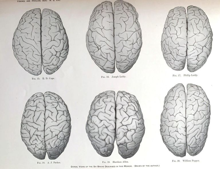 """""""A study of the brains of six eminent scientists and scholars belonging to the American Anthropometric Society, together with a description of the skull of Professor E.D. Cope."""" Offprint from the Transactions of the American Philosophical Society, N.S. Volume XXI, Part III. Edward Anthony SPITZKA, M. D."""