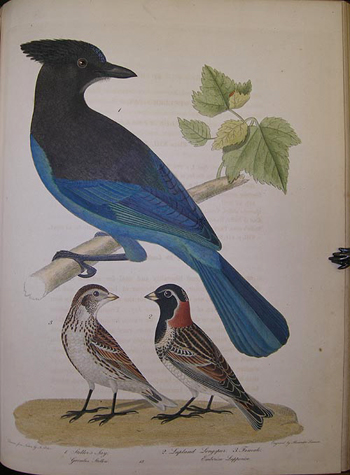 American ornithology; or, The natural history of the birds of the United States . . . . ; American ornithology; or, The natural history of birds inhabiting the United States, not given by Wilson. Alexander WILSON, Charles Lucien` BONAPARTE.