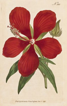 The Botanical Magazine; or, Flower-Garden Displayed in which the most ornamental foreign plants,...