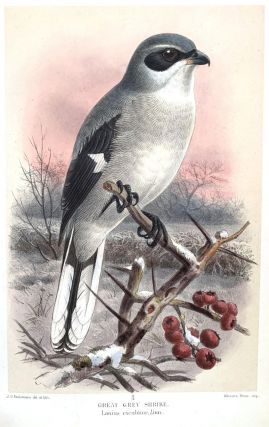 Coloured figures of the birds of the British Islands.
