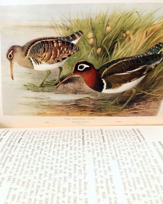 The game-birds of India, Burma and Ceylon. Ducks and their allies (swans, geese and ducks).