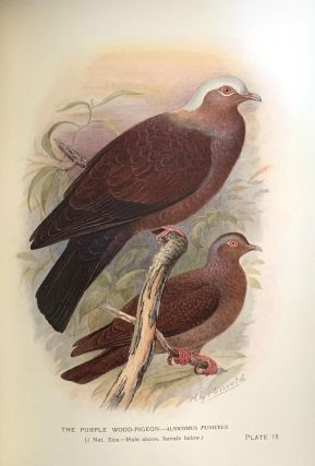 Indian pigeons and doves.