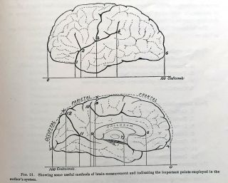 """""""A study of the brains of six eminent scientists and scholars belonging to the American Anthropometric Society, together with a description of the skull of Professor E.D. Cope."""" Offprint from the Transactions of the American Philosophical Society, N.S. Volume XXI, Part III."""