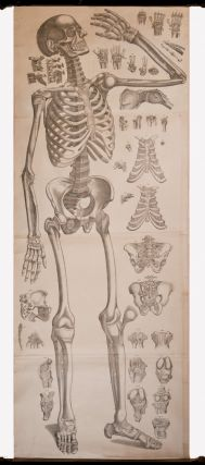 Four anatomical scrolls, or ecoche. J. A. ANATOMICAL SCROLLS. BECKERS, engraver
