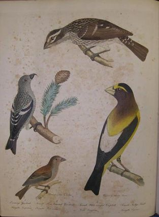 American ornithology; or, The natural history of the birds of the United States . . . . ; American ornithology; or, The natural history of birds inhabiting the United States, not given by Wilson